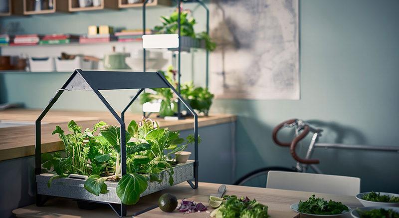 Découvrez le potager d'intérieur ou jardin d'intérieur